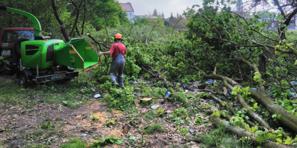 wycinka drzew w Gliwicach